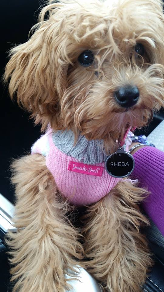 sheba sweater in car